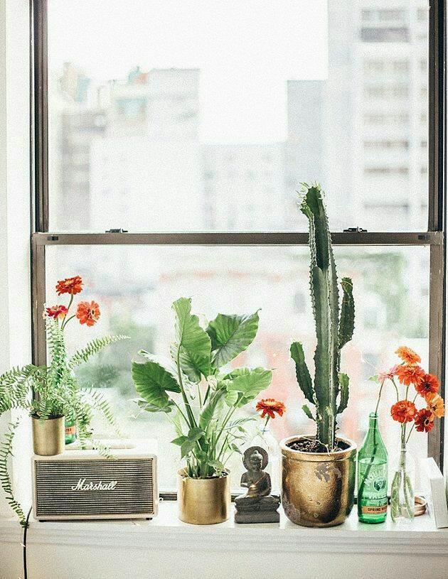 "alt=""plantas janela"""