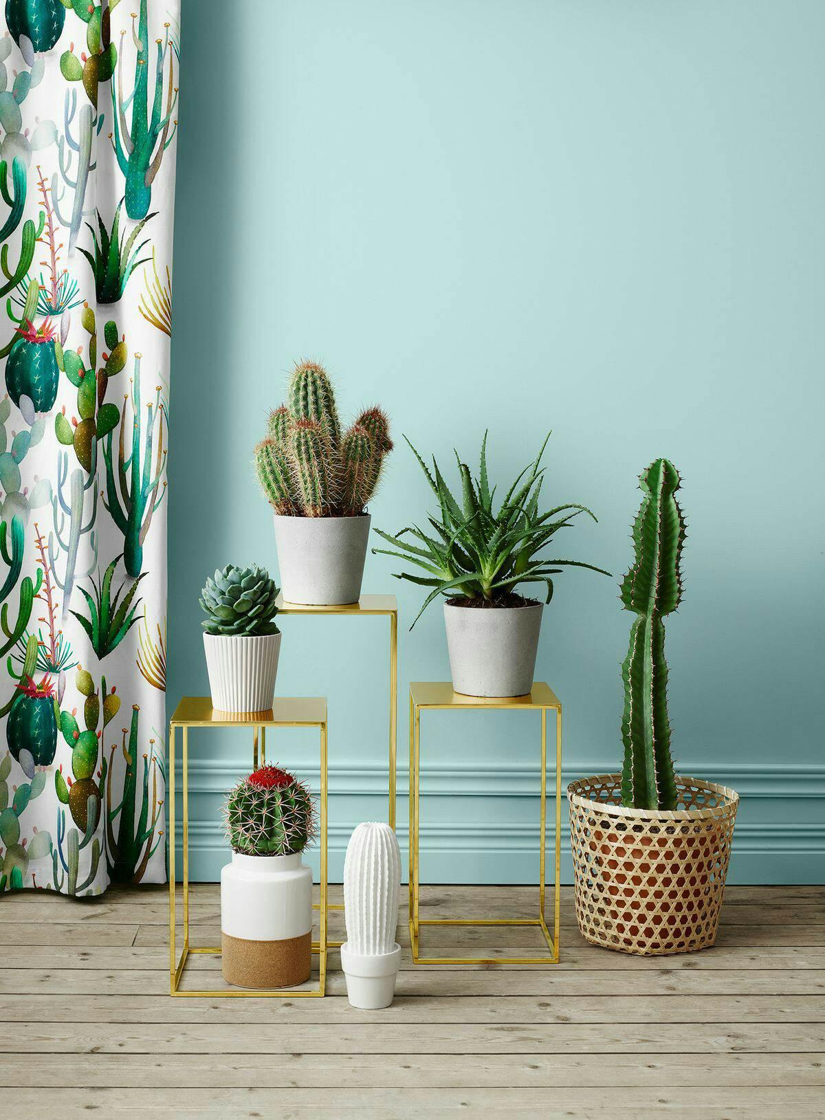 """alt=""""plantas suportes vasos e cachepôs"""""""