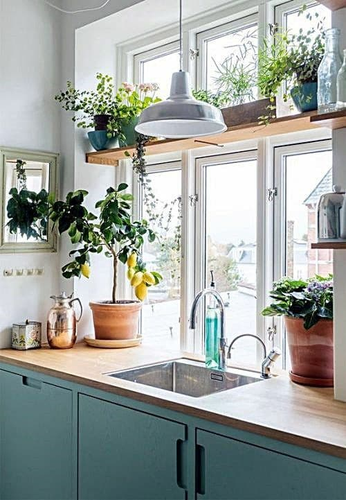 plantas dentro da cozinha