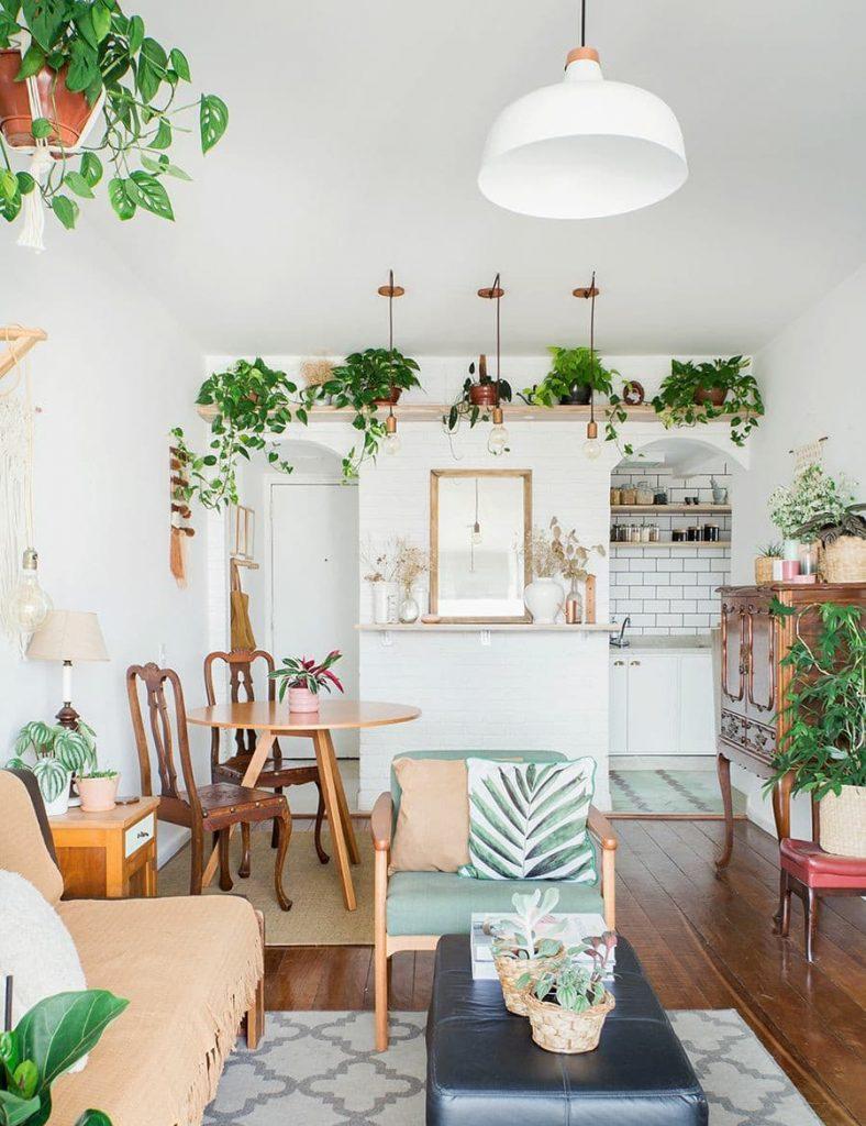 plantas dentro da sala